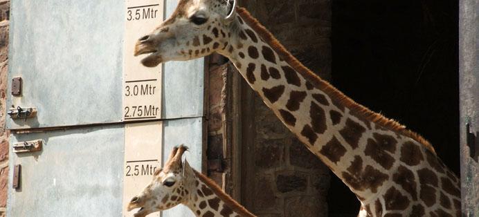 Chester Zoo UK